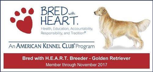 Bred with H.E.A.R.T Golden Retriever Program Breeder